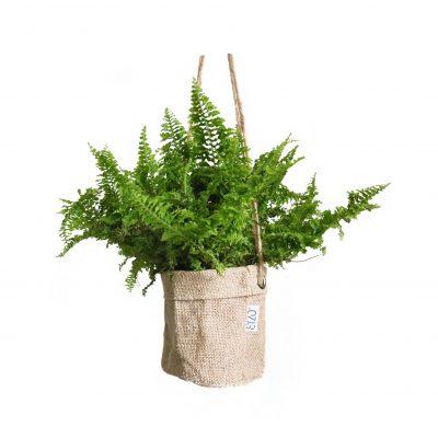 Bolsas de Yute para Plantas Colgantes con Anillo